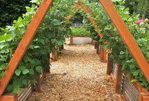Garden for hops