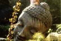Buddas