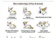 Dog Behaviour / Dog behaviour tips & insights.