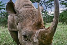 Ref: Rhino
