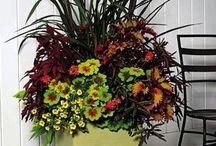 Pot Plants / Pot plants
