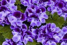Květiny živé