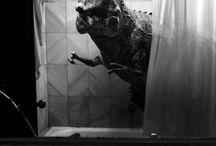 T-rex and friends / Rawr