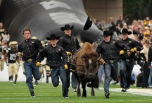 School Spirit - CU / Supporting our local University of Colorado-Boulder!