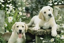 Love of my Life - Dogs