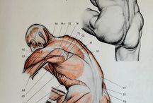 Anatomically correct