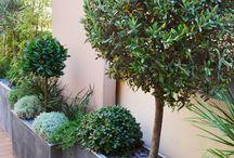 Terrasses et jardin