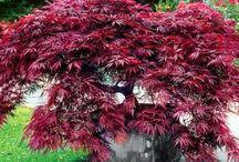 Garden - Red leaves