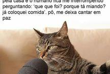 •Cansei De Ser Gato•