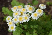Plantes médicinales / Idées de plantes médicinales à cultiver dans votre jardin.