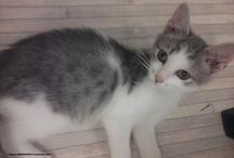 PILOU PILETTE AND MUM / Mebers of cat family