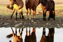 Horses - pictures