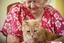 "Pets Assisting the Lives of Seniors (PALS)  / P.A.L.S. (Pets Assisting the Lives of Seniors) ""provides assistance with food and basic preventative veterinary care for the pets of our homebound clients. A pet can provide much needed companionship and helps reduce the isolation and loneliness that many of our clients experience. As one client wrote to us, ""God Bless you for thinking about our little pets. I love and adore my kitty more than anything or anyone on Earth. I couldn't live a day without him."""