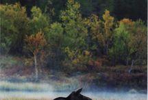 Metsästys ja luonto