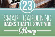 Gardening / Tricks and tips on all things garden