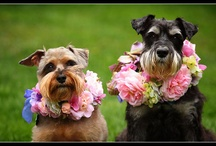 schnauzers & schnoodles / by Andrea Stieff