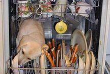 Psi humor :) / Nic nie rozśmieszy cię tak jak twój pies :)