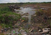 Devastación ambiental