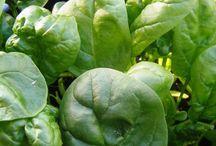 garden veg and herbs