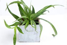 plante decorative