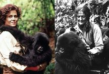 gorille dans la brume-chef d,oeuvre