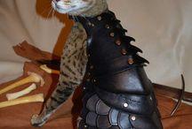 Кот-рыцарь