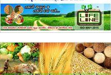 Vegetables / 100% Organic vegetables