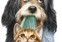 Chien/chat