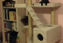 Berserk Cat Lady :-)