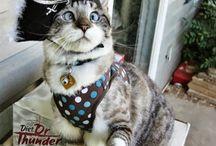 Hi-larious cats