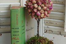 Roses  / by Megan