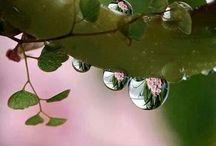 Water Drops♡♡♡