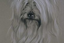 Celebrate the Silky Terrier / Celebrating all things Silky