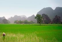 Ninh Binh / La provincia de Ninh Binh, hogar de Tam Coc y la antigua capital Hoa Lua