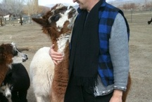 Sheepskin and Alpaca