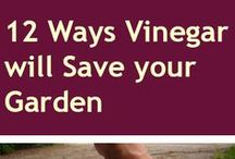 Vinegar and Weeds