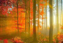 Spirit Of The Trees / by Scott Wilke