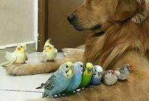 Şirin Hayvanlar