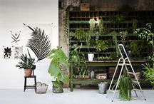 Green Design Styling / Interior design and renovation ideas in green