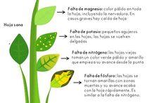 plantas (siembra cosechas)