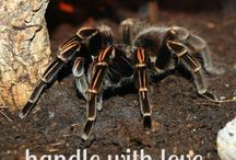 Inverts / ways to love, pamper, and care for your invertebrate pets including spiders and scorpions