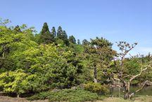 forest/2014 / 2014年の公園などの森のある風景