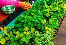Potted garden ideas