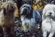 Pet Portraits / Handmade pet portrait paintings from photo.