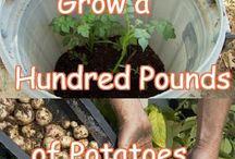 Growing vegetables etc.