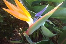 From my Garden / Flowers