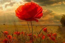 κόκκινα λουλούδια