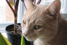 I found a forever home in #Montreal / Our success stories