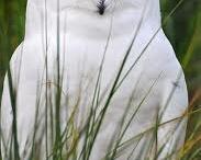 animalier owls
