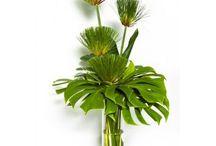 Kwiaty - liście